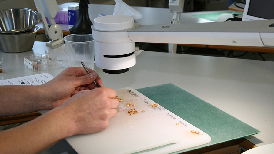 benefits_of_using_a_digital_microscope_in_agriculture_1